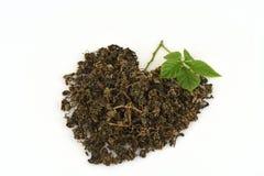 Le pentaphyllum chinois Thunb Makino de Gynostemma de nom de Jiaogulan sec et les feuilles ont arrangé dans une forme de coeur Photographie stock libre de droits