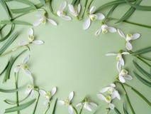 Le perce-neige blanc fleurit le cadre sur un fond vert Configuration plate Vue supérieure Photographie stock