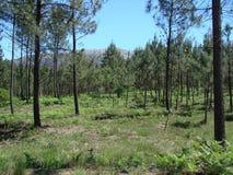 Le periferie della città di Redondale spain Viste naturali della foresta spagnola e di vari fiori della molla fotografia stock libera da diritti
