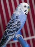Le perroquet Images libres de droits