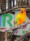 Le perroquet d'oiseau sourit sur une branche Photographie stock
