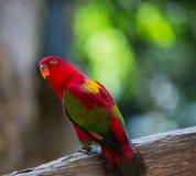 Le perroquet est si beau Photos libres de droits