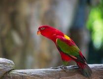 Le perroquet est si beau Images libres de droits