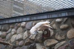 Le perroquet grignote la vidéo surveillance Images stock