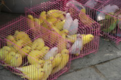 Le perroquet qui a été vendu Photos libres de droits