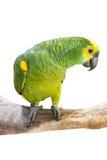 Le perroquet se tient sur la branche Image stock