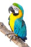 Le perroquet se tient sur la branche Images libres de droits