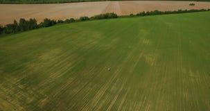 Le persone appena sposate stanno camminando nel campo con erba verde e tempo soleggiato video d archivio