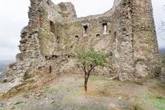 Le petit arbre s'est développé sur des ruines d'un temple antique avec des murs de briques Image libre de droits