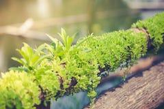 Le petit arbre se développe sur en bois sec photo libre de droits