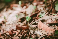 Le petit arbre se développe sur la terre image libre de droits