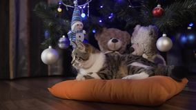 Le petit beau chat joue à l'arbre de Noël, vacances de Noël, égalisant clips vidéos