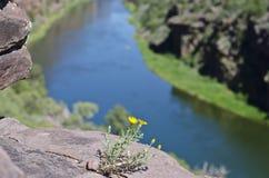 Le petit côté jaune de falaise de fleur photos libres de droits