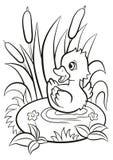 Le petit caneton mignon nage sur l'étang Photo stock