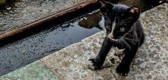 Le petit chat égaré noir regarde autour de la rue Photographie stock libre de droits