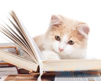 Le petit chat a affiché un livre Image libre de droits