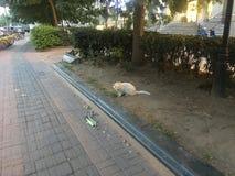 Le petit chat blanc dans la communauté marche image stock