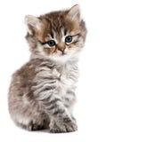 Le petit chat est isolé Image stock