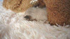 Le petit chaton dort sur une couverture pelucheuse banque de vidéos