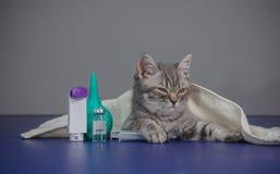Le petit chaton est malade, chaton de traitement Images libres de droits
