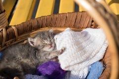 Le petit chaton mignon dort dans un panier avec des fils pour le tricotage Photos stock