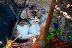 Le petit chaton mignon se situe dans les ombres sous un buisson Photographie stock