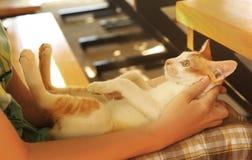 Le petit chaton rouge sur des enfants enroulent la photo haute étroite Image libre de droits