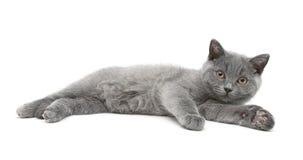 Le petit chaton se trouve sur un fond blanc Images stock
