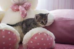 Le petit chaton tricolore avec des yeux bleus se repose sur l'ours blanc de jouet Images stock