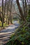 Le petit chemin Image stock