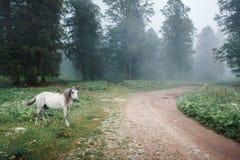 Le petit cheval se tient près de la route photographie stock libre de droits