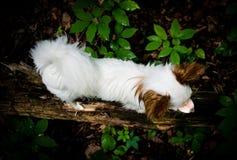 Le petit chien marche à travers la forêt d'identifiez-vous photos stock