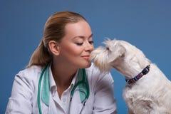 Le petit chien mignon rend visite au vétérinaire Photographie stock libre de droits