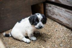Le petit chiot mignon dans une boîte en bois demande à être adopté avec espoir Chien sans abri photos libres de droits