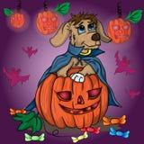Le petit chiot recherche des bonbons à un potiron pour Halloween Photos stock
