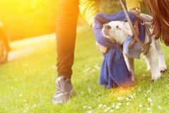 Le petit chiot sale de chien de Labrador obtient nettoyé image stock