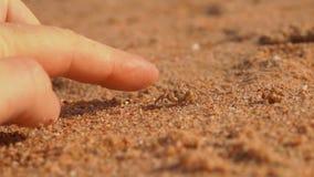 Le petit crabe le court parti dans le sable clips vidéos