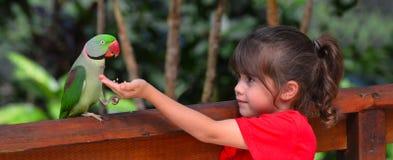 Le petit enfant alimente Alexandrine Parrot photos stock