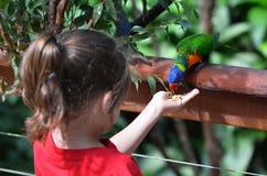 Le petit enfant alimente un arc-en-ciel Lorikeet image stock