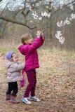 Le petit enfant deux prennent une photo des fleurs de cerisier au printemps Image stock