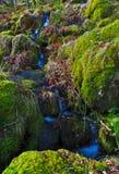 Le petit filet de l'eau circulant sur la mousse a imbibé des roches par le chemin de Watkins, Snowdon Photographie stock libre de droits