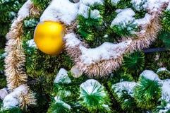Le petit froid de sapin pendant l'hiver Photographie stock
