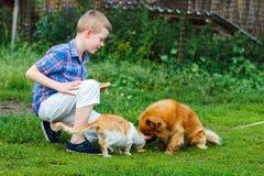 Le petit garçon alimente le chat égaré et le chien sans abri roux Photographie stock