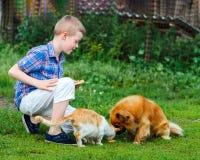 Le petit garçon alimente le chat égaré et le chien sans abri roux Images libres de droits