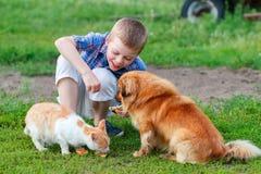 Le petit garçon de sourire alimente le chat sans abri et le chien égaré roux dans la cour Image stock