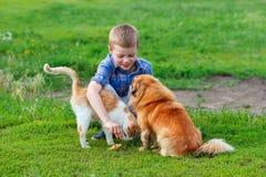 Le petit garçon de sourire alimente le chat sans abri et le chien égaré roux dans la cour Image libre de droits