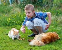 Le petit garçon de sourire dans une chemise de plaid alimente le chat et le redh sans abri Images stock
