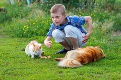 Le petit garçon de sourire dans une chemise de plaid alimente le chat sans abri et le chien égaré roux dans la cour, chien se tro Image libre de droits