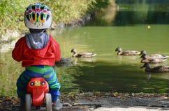 Le petit garçon observe des canards dans le lac Photographie stock