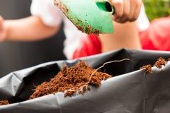 Le petit garçon pelle au sol mélangé, préparation pour planter l'arbre images libres de droits